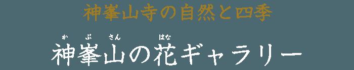 神峯山の花ギャラリー