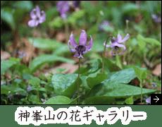神峯山の花ギャラリー 大阪高槻市 日本最初毘沙門天 神峯山寺