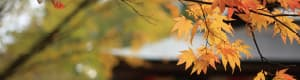 » 神峯山寺の自然と四季