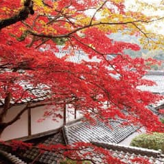 神峯山寺の四季 秋