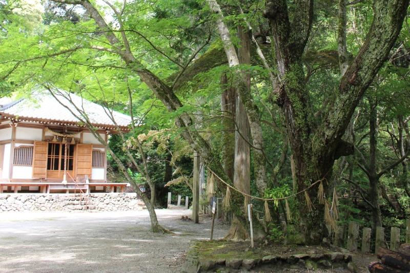 役行者 手植えの菩提樹